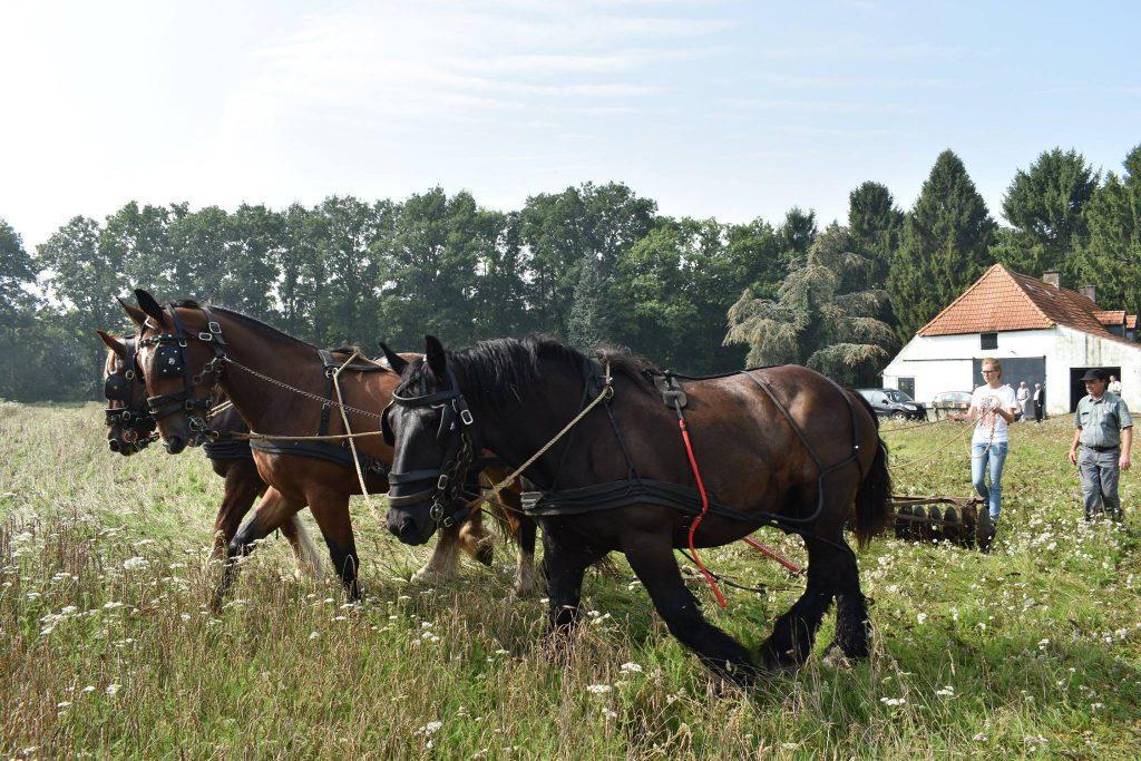 Film voorbereiding de wilde boerderij 003
