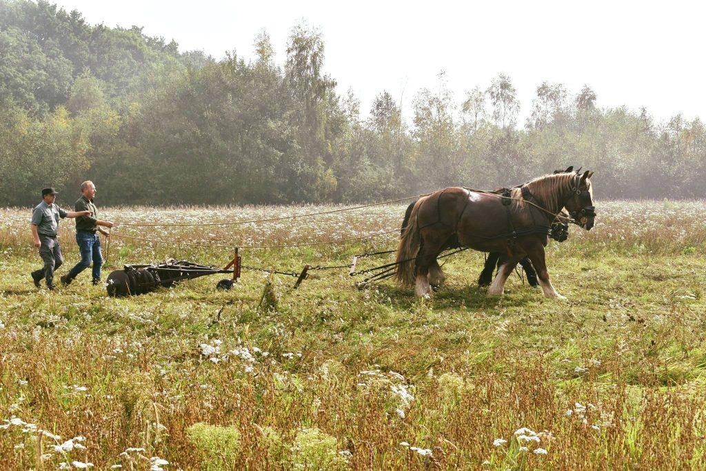 Film voorbereiding de wilde boerderij